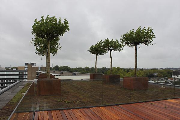 Constructie Bakken - Dordrecht: Cortenstalen boombakken Dordrecht